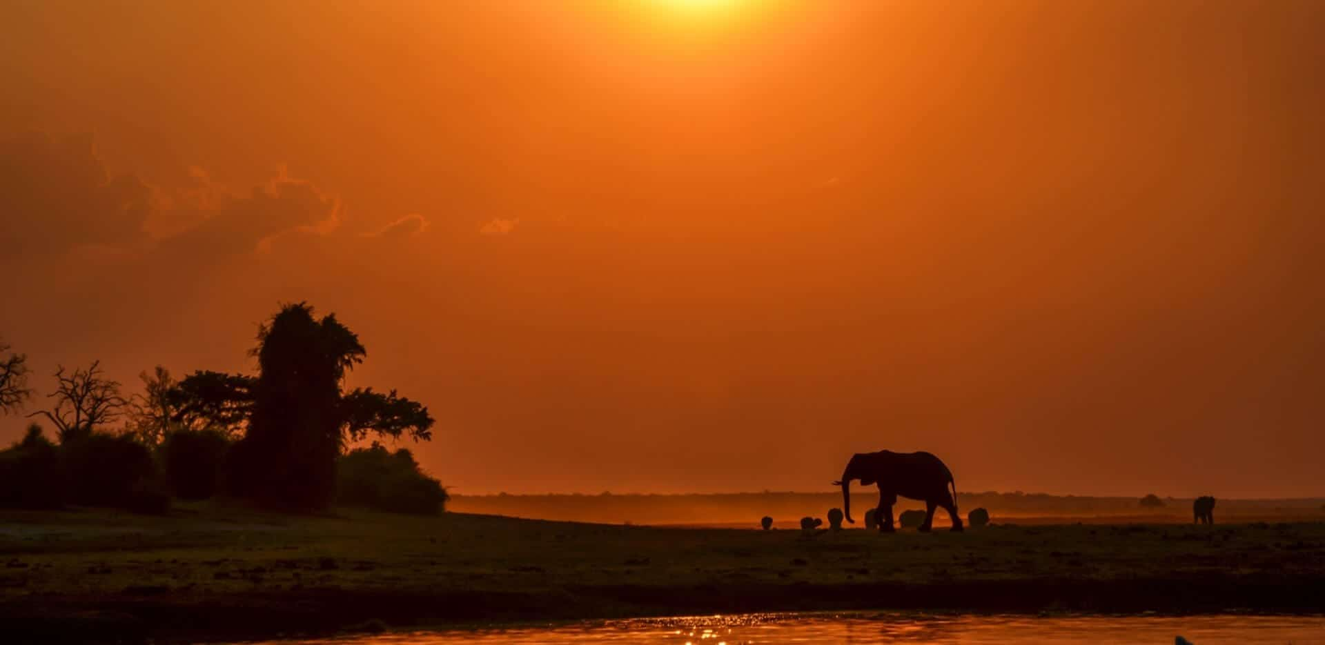 Chobe National Park Botswana